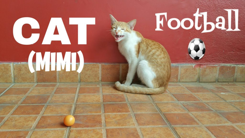 Cat playing Football with Ping-pong ball – Very  cute and  funny.