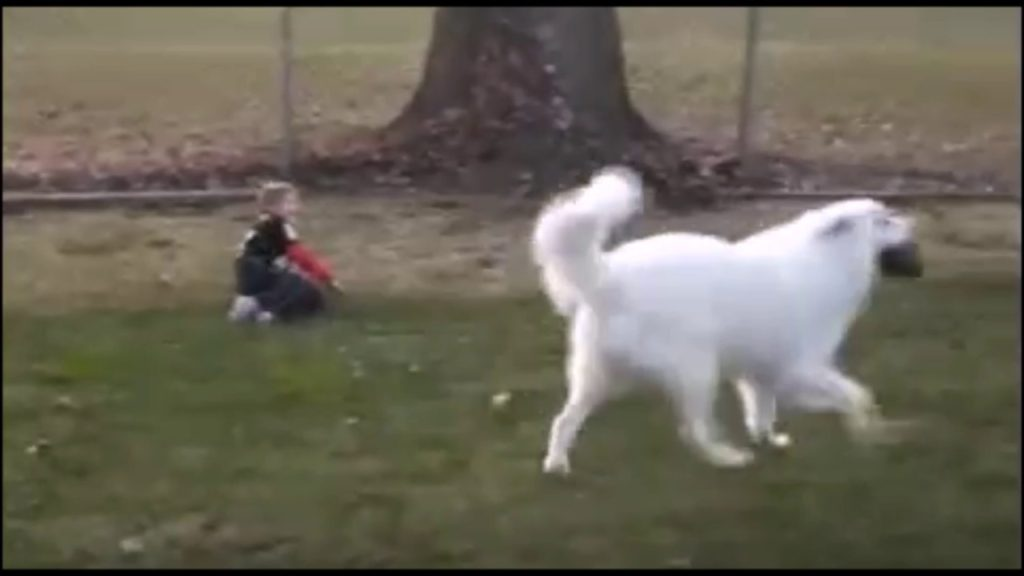 Dog Tackles Boy Playing Football