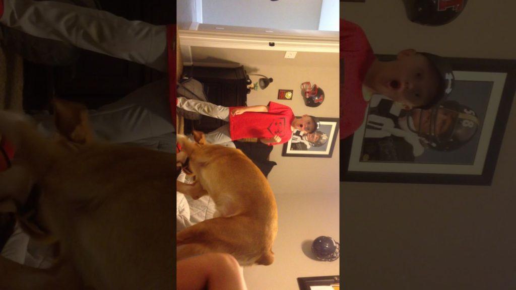 Teaching my friend's dog how to play football