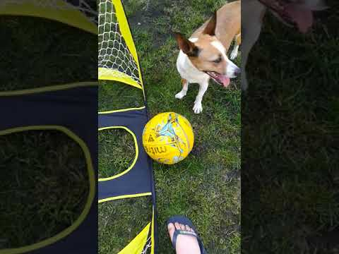 I taught my dog to play football :)