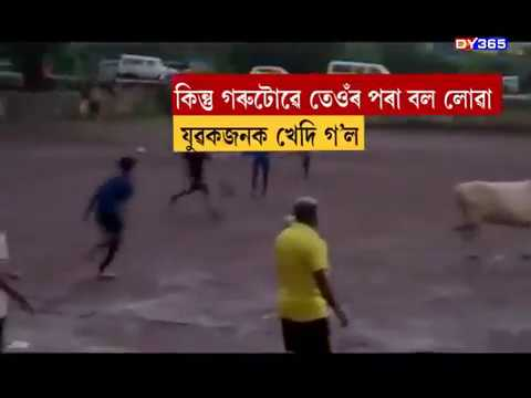 24 GHANTA || WHEN COW PLAY FOOTBALL !