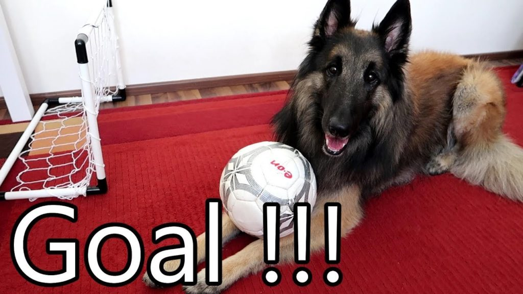 Dog Plays Football (Soccer) and Scores a Goal!