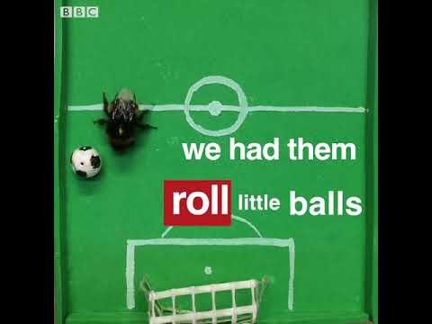 Smart bees can 'play' football