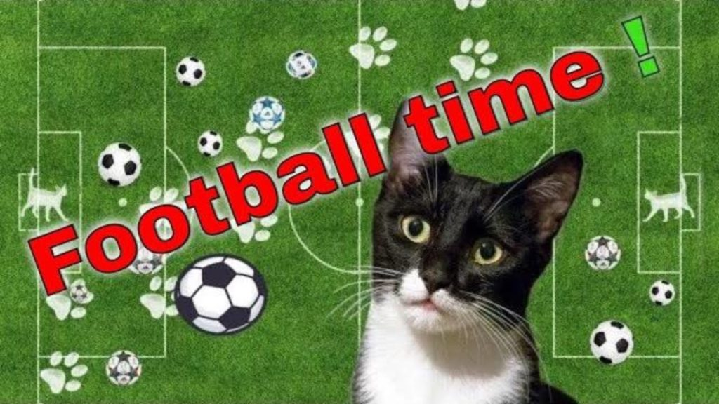 My cat plays football. Katy plays football