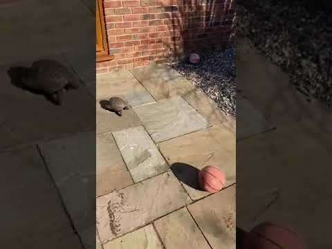 The turtle's wonderful football exercises !!