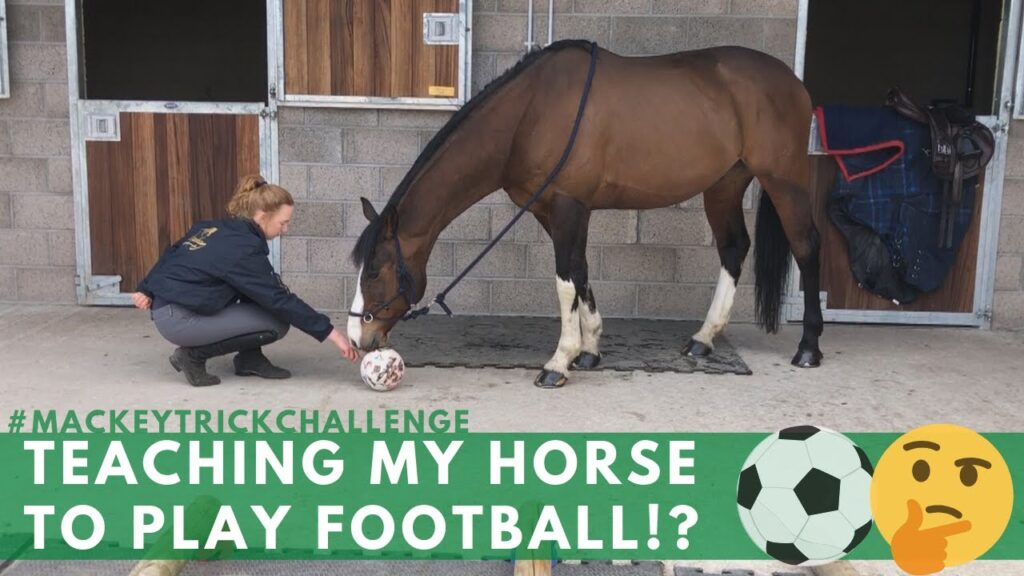 TEACHING MY HORSE TO PLAY FOOTBALL?!   #MackeyTrickChallenge